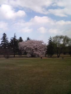 4月のゴルフを振り返る